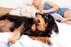 En kvinna med hennes hemmastadda hundkapplöpning och att koppla av i sovrum fotografering för bildbyråer
