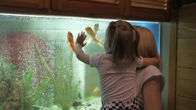 En kvinna med lite flickan i hennes armar som står på ett stort akvarium med kuriositet med hänsyn till att simma fisken arkivfilmer