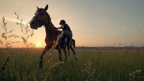 En kvinna monterar upp en häst, slut lager videofilmer