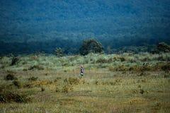 En kvinna och en vildmark arkivfoton