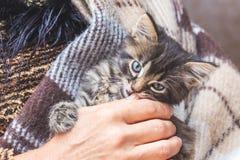 En kvinna rymmer en liten kattunge på henne händer En kattunge skyddas Royaltyfri Fotografi