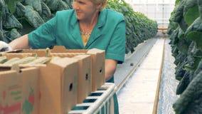 En kvinna samlar gurkor på en lantgård arkivfilmer
