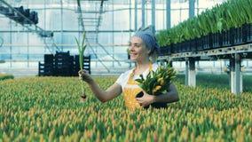 En kvinna samlar tulpan från jordning som arbetar i en burk stock video