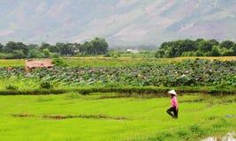 En kvinna som går på fältet i Hagiang, nordliga Vietnam Arkivbilder