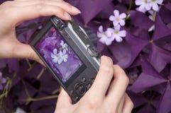 En kvinna som rymmer en digital kamera för punkt och för fors royaltyfria bilder