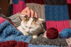 En kvinna som slår en katt Royaltyfria Foton