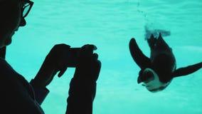 En kvinna tar bilder av en rolig pingvin Fågeln simmar i pölen, det kan ses till och med det genomskinliga fönstret royaltyfria bilder