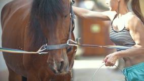 En kvinna tvättar en häst i stallet arkivfilmer