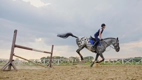 En kvinnajockey hoppar över barriärerna på en häst i en hoppa konkurrens, ultrarapid lager videofilmer
