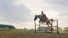En kvinnajockey hoppar över barriärerna på en häst i en hoppa konkurrens, ultrarapid stock video