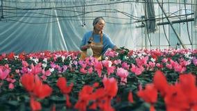 En kvinnavattencycleman, medan arbeta i ett stort växthus lager videofilmer