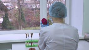 En kvinnlig forskare för forskning genom att använda enpipett i laboratoriumet Biotekniker stock video