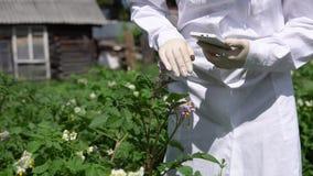 En kvinnliglabbtekniker studerar tillväxten av potatisar på en experimentell plats stock video