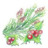 En kvist av järnek och julgranen Arkivbild