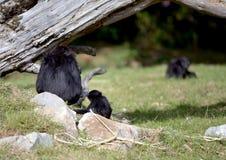 En lättrörlig Gibbon och hon behandla som ett barn Royaltyfria Foton