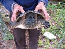 En låsande fast sköldpadda Royaltyfria Bilder