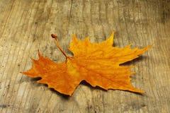 En lönnlöv för orange guling som ligger på ett gammalt ädelträbräde fotografering för bildbyråer