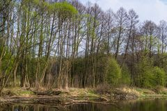 En lös flod i centrala Polen, Wartaen och det Widawka landskapet parkerar Royaltyfri Foto
