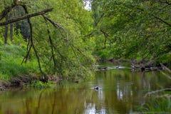 En lös flod i centrala Polen, Wartaen och det Widawka landskapet parkerar Royaltyfria Bilder