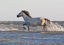 En lös vit häst står på en sandbank arkivbilder