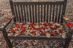En lövverkkudde på en bänk i en skogsmark Arkivbilder