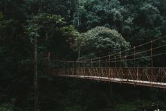 En l?ng markisg?ngbanabro i en skog arkivbild