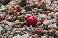 En la cereza de rocas con descensos Fotografía de archivo libre de regalías
