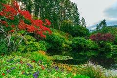 En la charca árboles y flores reflejados Imágenes de archivo libres de regalías