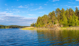 En la costa del lago Ladoga los pinos crecen Imágenes de archivo libres de regalías