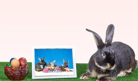 En la cubierta verde del conejo al lado de una fotografía en un marco y los huevos de Pascua Imagenes de archivo