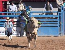 En La Fiesta De Los Vaqueros, Tucson, Arizona Royaltyfri Bild