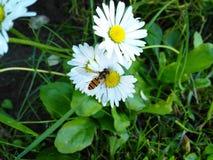 en la flor Fotografía de archivo libre de regalías