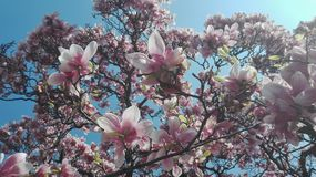 En la floración imagenes de archivo