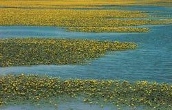 en la floración Imagen de archivo