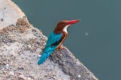 En la frontera con Paquistán, la fauna asombrosa de Rajasthán imagen de archivo