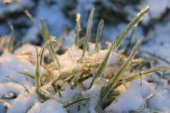 En la frontera del invierno y de la primavera Foto de archivo libre de regalías