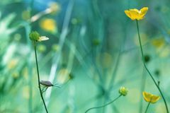 En la hierba Fotografía de archivo libre de regalías