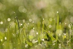 En la hierba Imagen de archivo