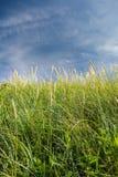 En la hierba Arena de Cata, Sanday, las Orcadas, Escocia Imagen de archivo