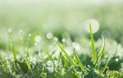 En la hierba cubierta de rocio Fotos de archivo libres de regalías