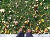 en la hierba verde con las hojas de otoño, otoño 2016 Fotografía de archivo libre de regalías