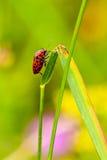 En la lámina de la hierba Foto de archivo