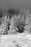 En la madera Fotografía de archivo libre de regalías