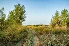 En la manera al bosque del otoño para las setas Imagenes de archivo