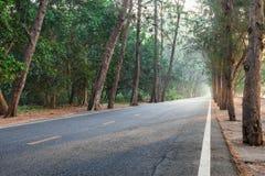 En la manera con la carretera recta de madera de árbol de pino de la mañana de la salida del sol Imágenes de archivo libres de regalías