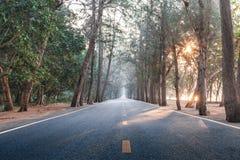 En la manera con la carretera recta de madera de árbol de pino de la mañana de la salida del sol Imagen de archivo libre de regalías