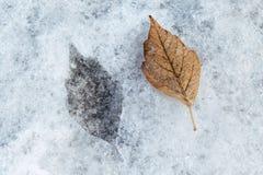 En la marca del hielo en la forma de una hoja del abedul Fotografía de archivo libre de regalías