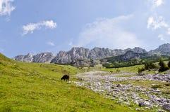 En la montaña Fotos de archivo