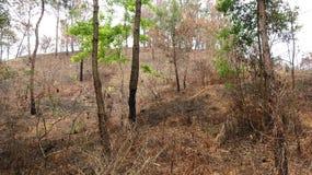 En la montaña quemada por el fuego, hay un pequeño árbol que crece las hojas verdes fotografía de archivo
