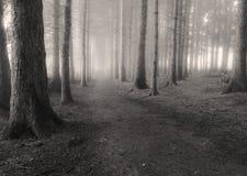 En la niebla Fotos de archivo libres de regalías